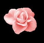 «Four Roses»  0_8cde1_cc50f6cc_S