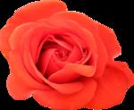 «Brigit_Flowery_Meadow» 0_8d482_9c82a558_S