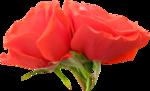 «Brigit_Flowery_Meadow» 0_8d484_d50dd45d_S