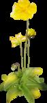 «Brigit_Flowery_Meadow» 0_8d494_36528acc_S