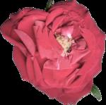 «Vintage Rose» 0_8f57e_e6ec119d_S