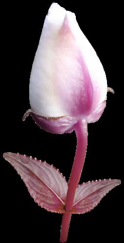 «Valentinas Creations_Roses Smell» 0_8f5f0_31535ec3_L