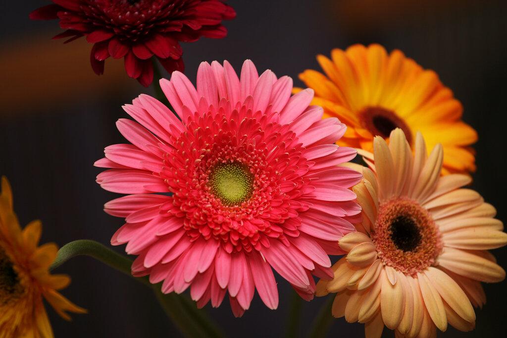 Красивые фото букетов цветов в высоком качестве привлекает