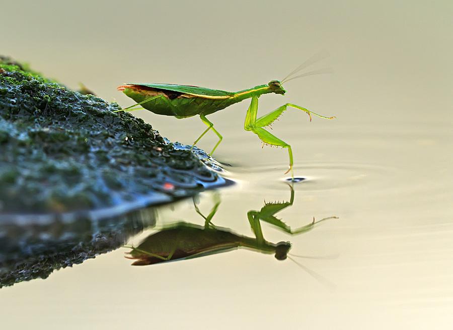 Отличное макро. Фотограф Shikhei Goh