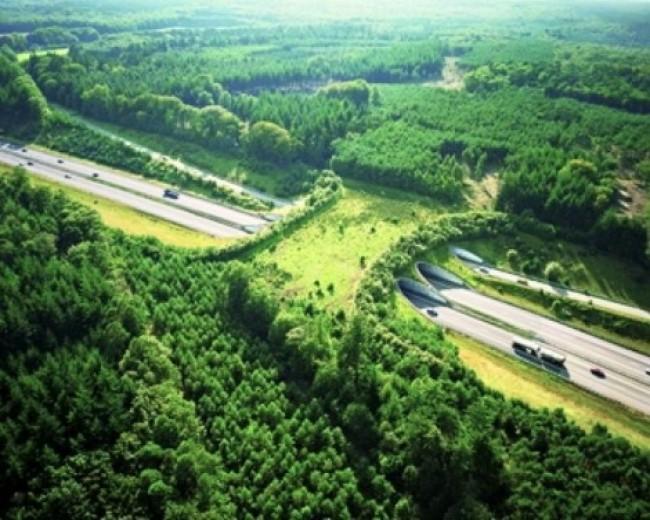 Мост дикой природы в Нидерландах