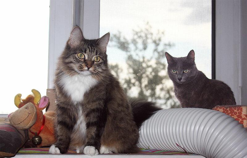 Дуся и Тинки, 11 августа 2012 года