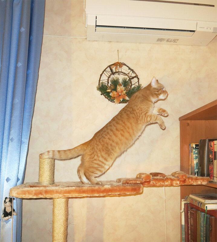 Бася прыгает на крышу стеллажа