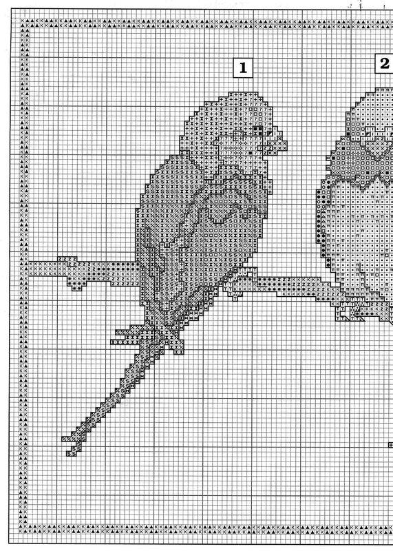 Волнистые попугайчики и