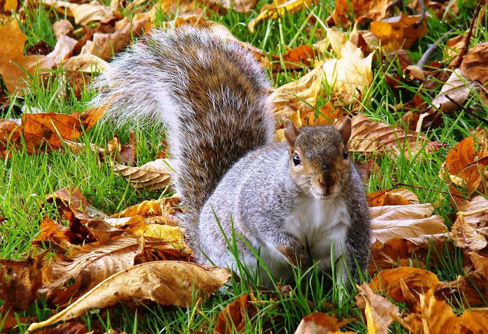 осень картинки животные готовятся к зиме это время