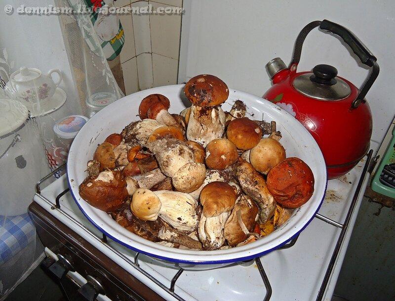 Августовские грибочки
