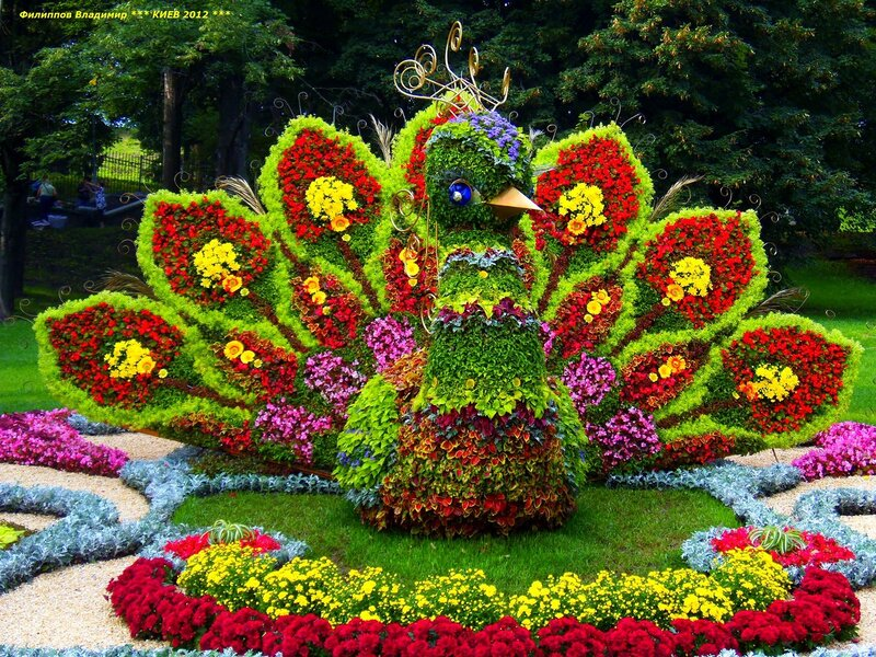Композиции из цветов на тему мира, букет английских роз