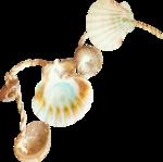 NLD Shells on string.png