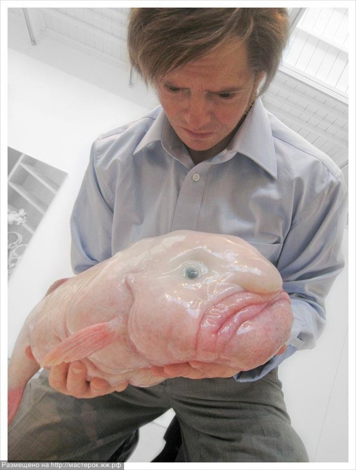 blob fish in action