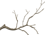 ial_as_sf_treebranch1.png