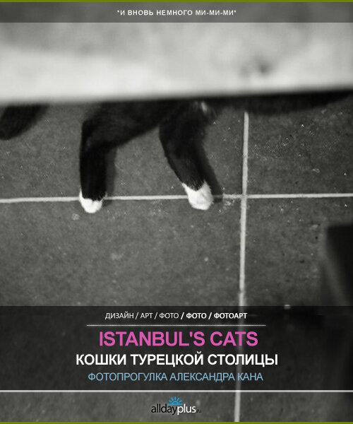Турецкие кошки. Прогулка по Истамбулу Александра Кана. 13 кошек.
