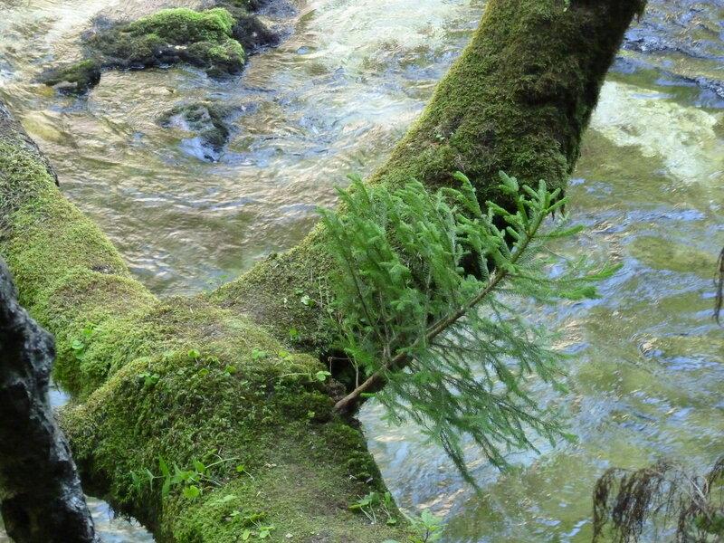 В лесу родилась елочка:)