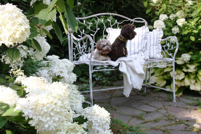 Сад, роз и гортензий и болонок!