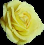 priss_Birthday_fabricrose1.png