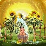 «AD_Sunflower_summer»  0_8c736_3702fd4a_S