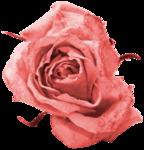 «Four Roses»  0_8cdf7_fc3ef34_S
