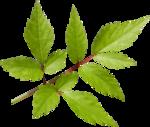 «Brigit_Flowery_Meadow» 0_8d488_8b437016_S
