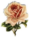 mzimm_bits_of_yesterday_rose_s.png