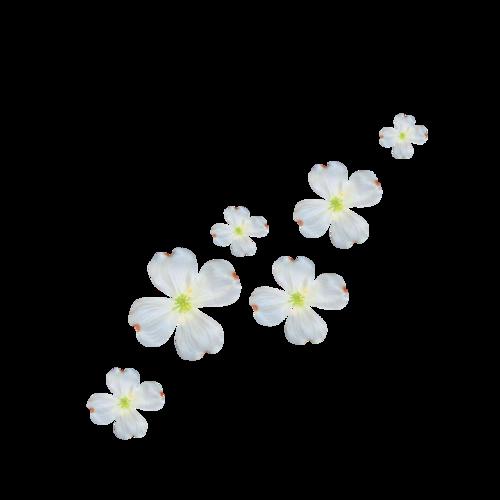 «Want_Spring» 0_8ea89_dc4e7007_L