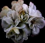 cvd inner storm flower head 3.png