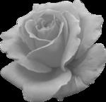 «Vintage Rose» 0_8f56a_42c8d388_S