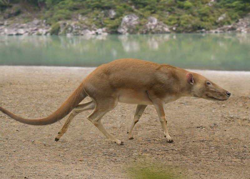 12. Longisquama Лонгисквама — это вымерший род диапсид. Выделяют только один вид, Longisquama insign