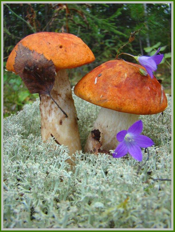 Вот и наступила пора грибных заготовок.  Вот несколько рецептов для маринада различных видов грибов.