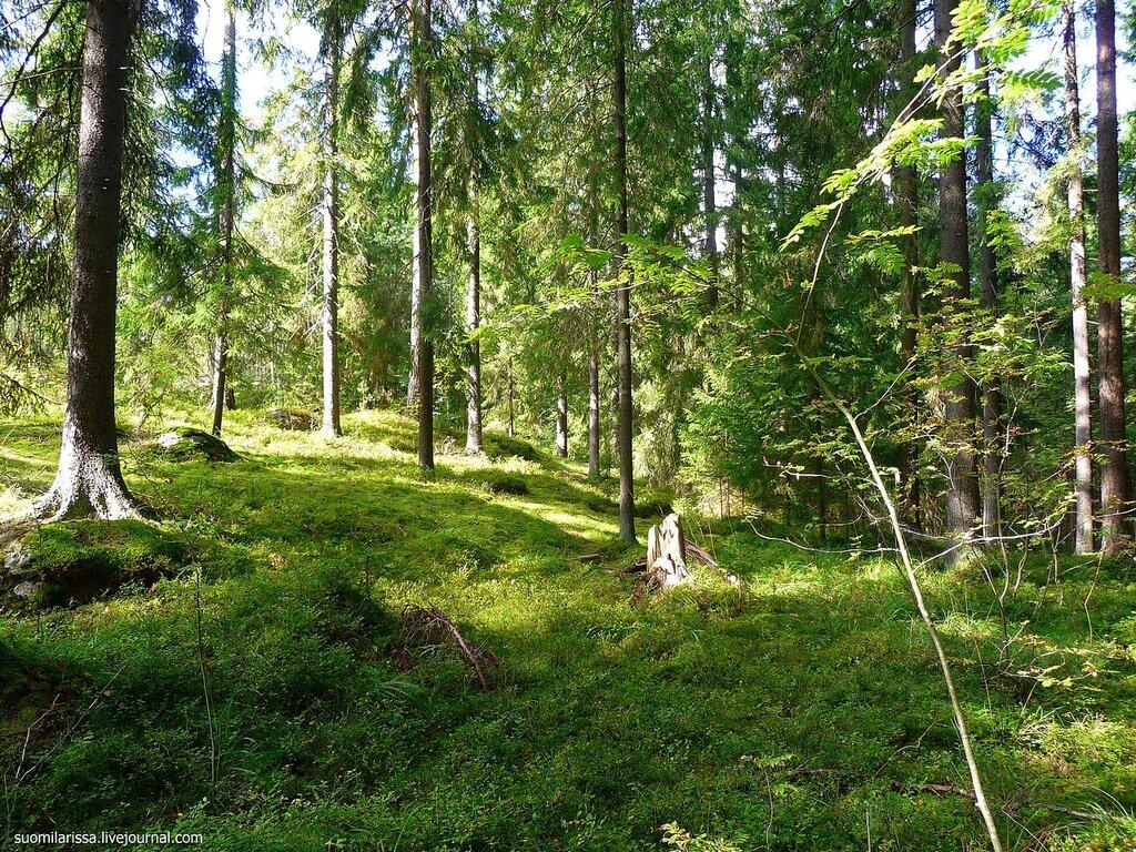 Гуляя по лесу...