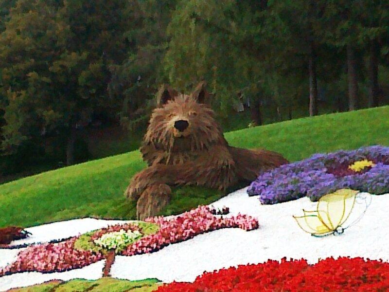 Волк из растений