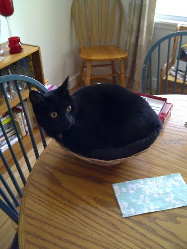 Идеальные места для отдыха – версия для котов
