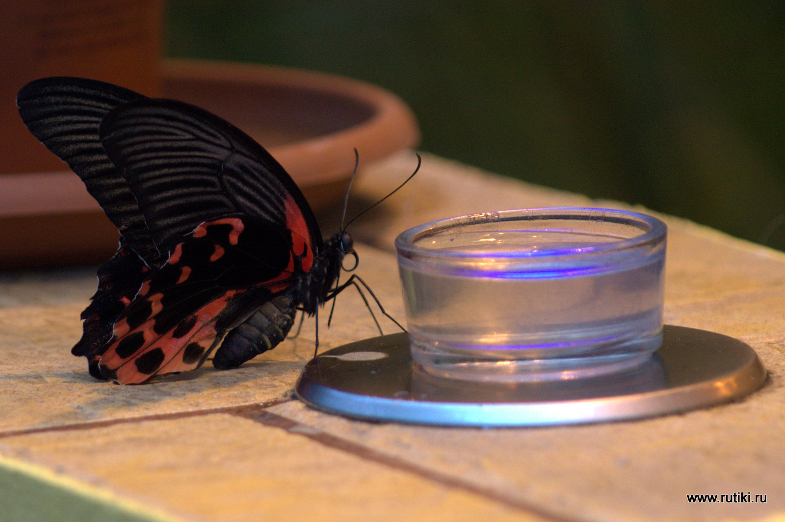 Выставка бабочек на ВВЦ