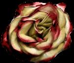 feli_btd_rose.png