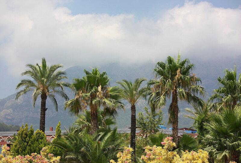 Пальмы, горы, облака