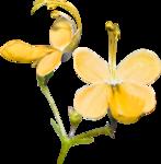 Lilas_Old-Garden_elmt (46).png