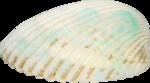 NLD Big Shell.png
