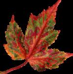 AutumnMelody_by GalinaV_el (54).png