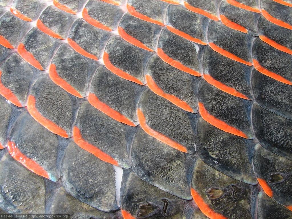 кожа рыб картинки горшок даёт жёсткий
