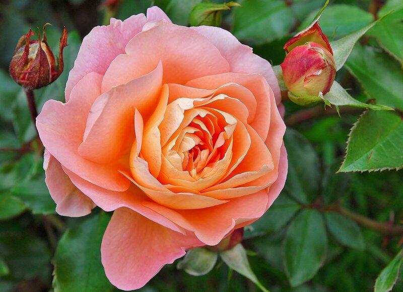 Розовый привет сентябрю....