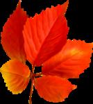 Осень золотая(сборник)