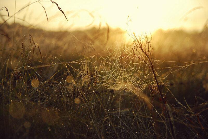 Потрясающие фотографии последнего восхода солнца этого лета