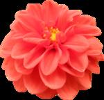 «Brigit_Flowery_Meadow» 0_8d473_b22d07e8_S