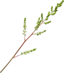 «Brigit_Flowery_Meadow» 0_8d487_b4a27c2f_S