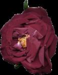 «Vintage Rose» 0_8f57d_7fa687b2_S