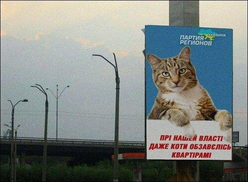 Babussy cat