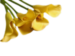 Flower-886618.png