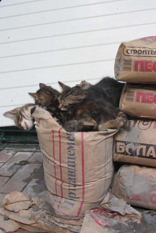 Мой кошкин дом 0_93089_1205c97c_-1-XL